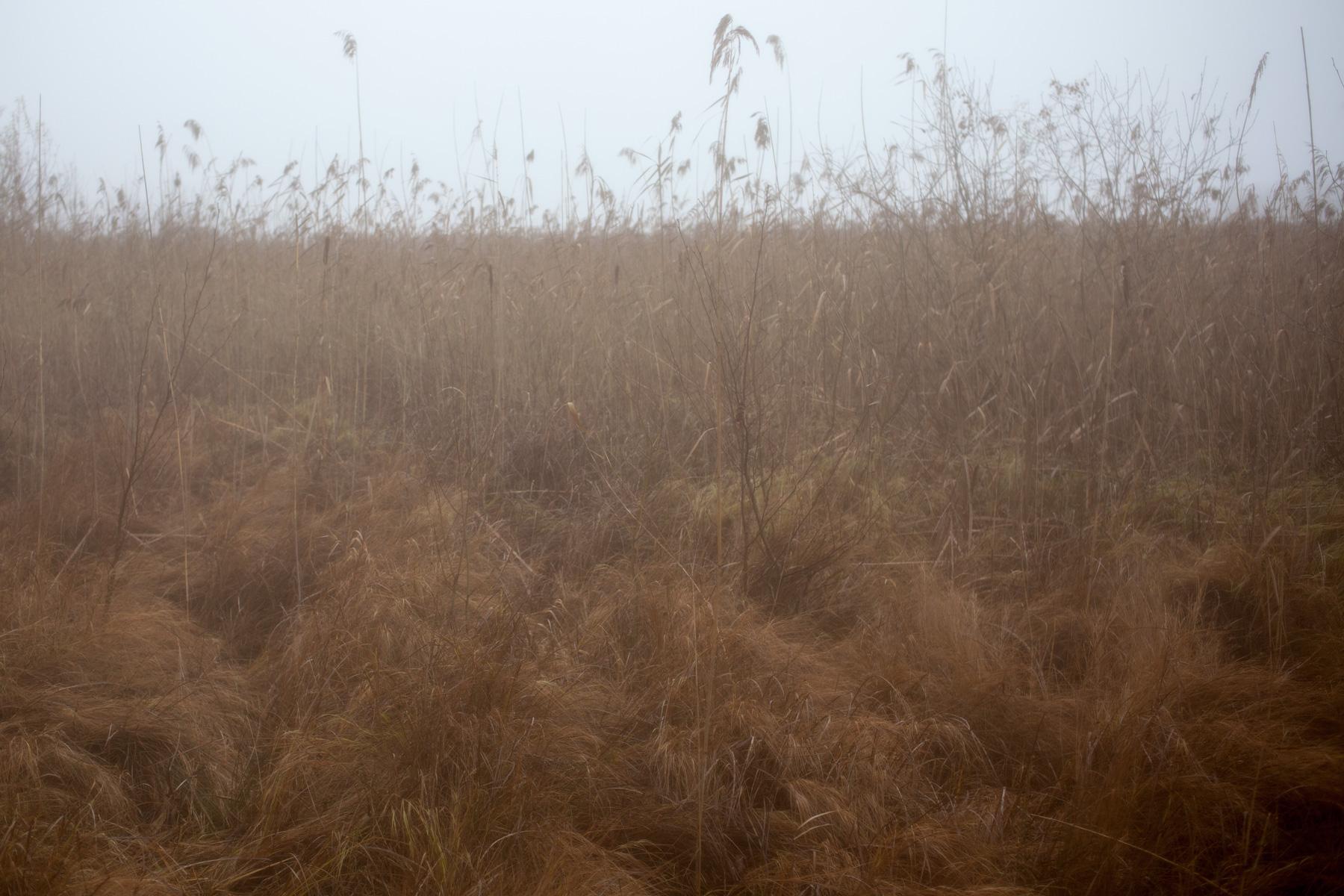 among-teh-reeds-6