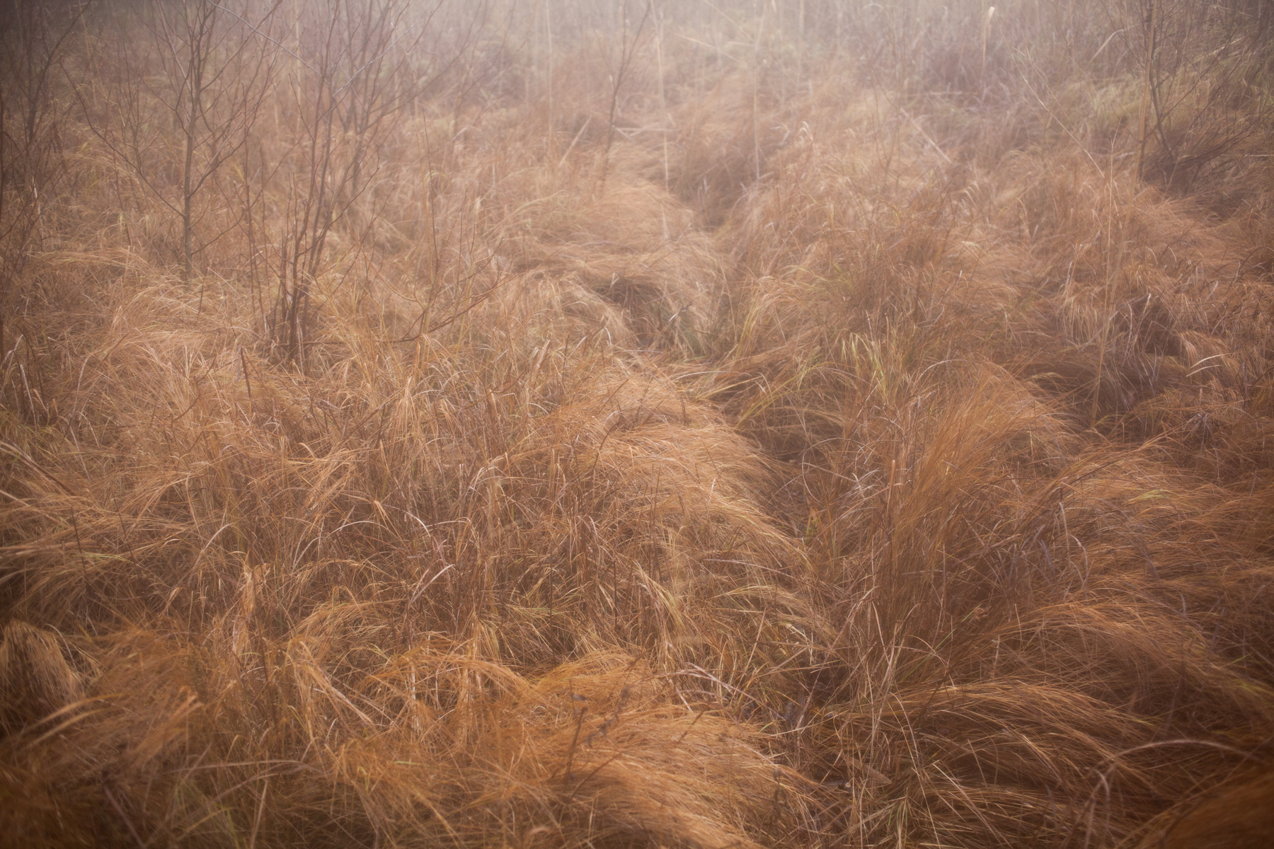 among-the-reeds-5